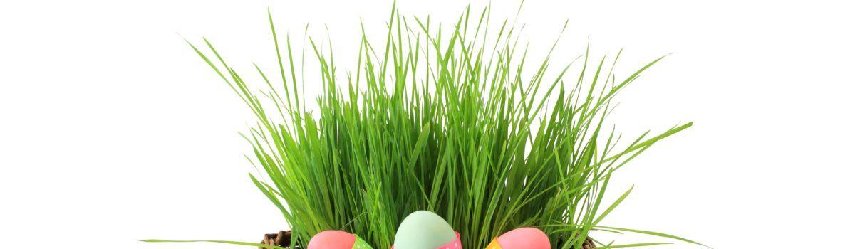 Spokojnych i zdrowych Świąt Wielkanocnych!